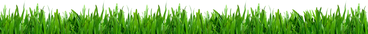 Grass-Footer-Cropped1
